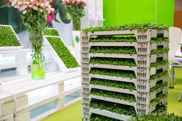 Stos pudełek z zbliżeniem roślinności