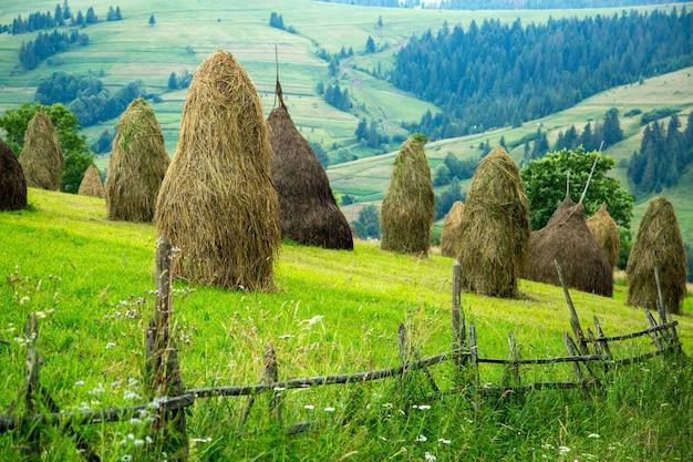 Stos siana na łące górskiej na zboczu wzgórza. piękny krajobraz górskiej wsi w jasny, słoneczny dzień. karpaty ukraina