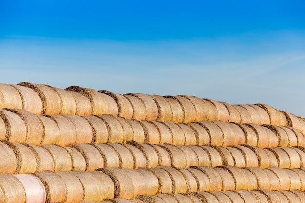 Stos słomy na polu pole uprawne, na którym leżały stogi słomy po żniwach pszenicy, pole zboża, rolnictwo i żywność ekologiczna, sezon jesienny, błękitne niebo