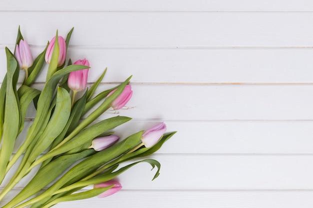Stos świezi różowi tulipany na bielu