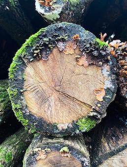 Stos ułożonych w stos naturalnych przetartych kłód drewnianych