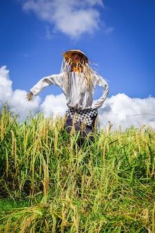 Strach na wróble w jatiluwih ryżowego pola ryżowych tarasach, bali, indonezja