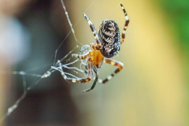 Strach przed arachnofobią przed ugryzieniem pająka. makro z bliska pająk na pajęczyna pajęczyna na naturalne niewyraźne tło. życie owadów. horror przerażający przerażający baner na halloween.