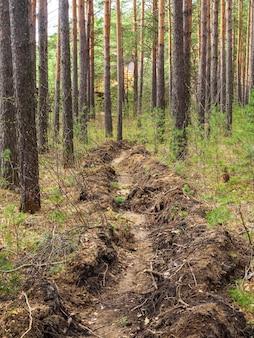 Strażacy wykopali rów, aby zapobiec pożarom. zapobieganie pożarom lasów, środki ostrożności i ochrona. bezpieczeństwo.
