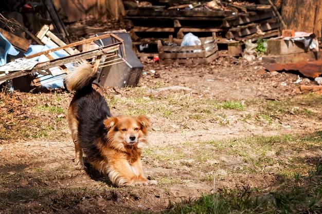 Street dog obok kosza