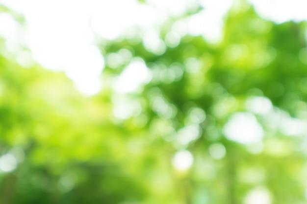 Streszczenie bokeh rozmycie drzewo natura tło z promieni słonecznych na lato.