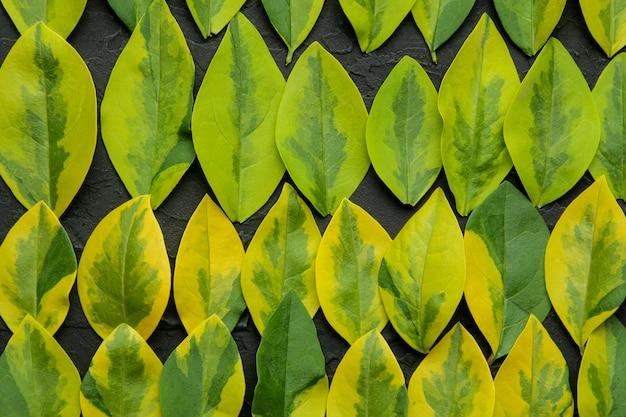 Streszczenie lato kompozycja pięknych zielonych liści na betonowym czarnym tle. tło liści. widok z góry