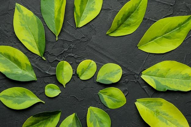 Streszczenie lato kompozycja pięknych zielonych liści na betonowym czarnym tle. wzór liścia. widok z góry