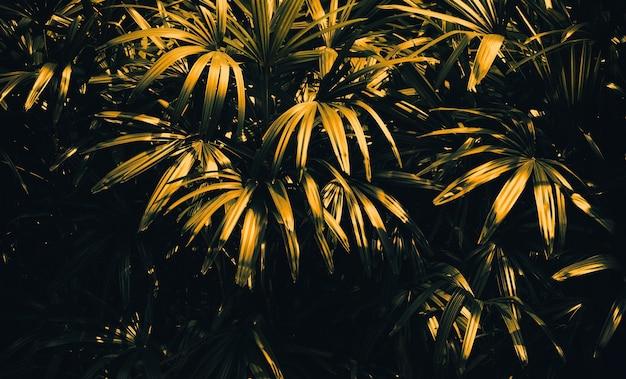 Streszczenie liść drzewa w złote koncepcje background.nature projektowania.