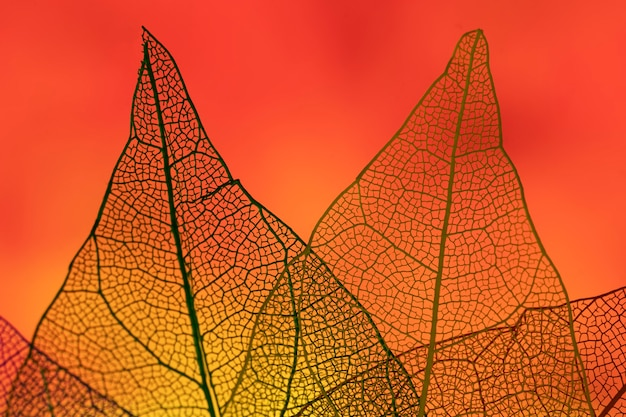 Streszczenie liście z czerwonym podświetleniem