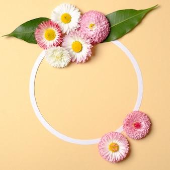 Streszczenie minimalna kompozycja. zaokrąglona ramka z kwiatami stokrotki i zielonymi liśćmi na pastelowym żółtym tle