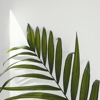 Streszczenie minimalna roślina w pomieszczeniu pozostawia zbliżenie
