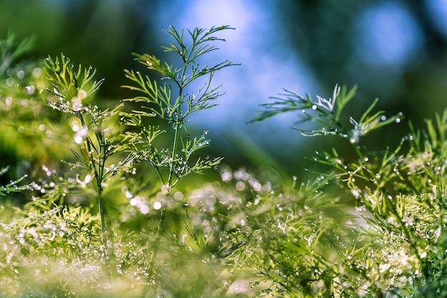 Streszczenie (niewyraźne, niewyraźne) naturalnych kwiatów zielonych roślin z pięknym bokeh, rosa na trawie