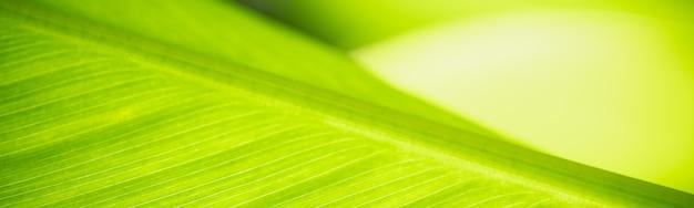Streszczenie niewyraźne zielony liść natura, używając jako tła naturalnych roślin, koncepcja strony tytułowej ekologii.