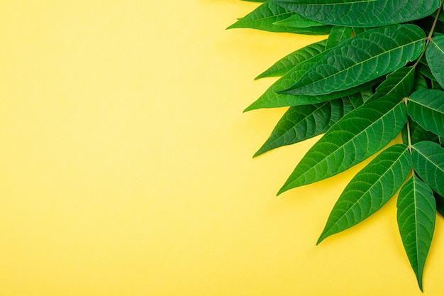 Streszczenie obramowanie ramki tropikalnych zielonych liści na żółto