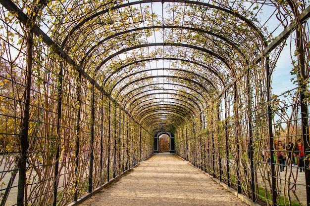 Streszczenie perspektywiczny widok łukowego tunelu, pergola do pnączy roślin i kwiatów w parku w wiedniu, w jesienny dzień.