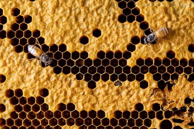 Streszczenie plaster miodu z pszczoła tekstura tło