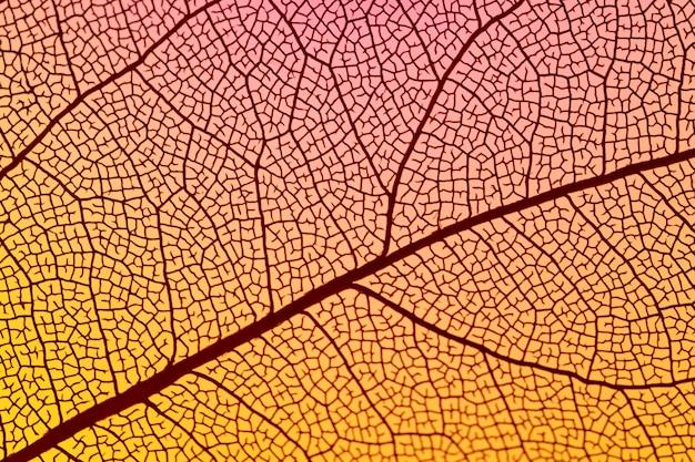 Streszczenie pomarańczowy liść jesienią
