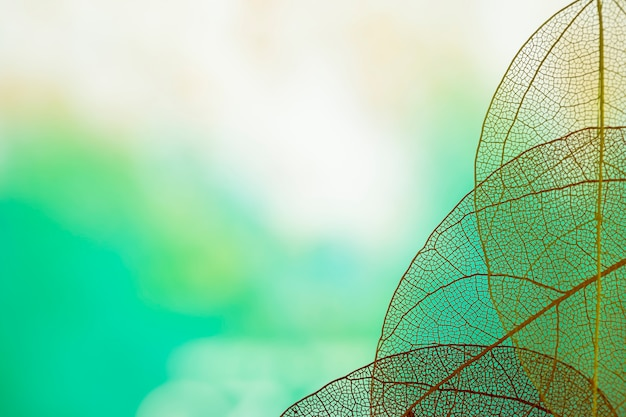 Streszczenie przezroczyste zielone liście