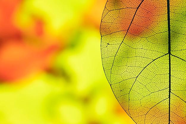 Streszczenie przezroczysty liść jesienią