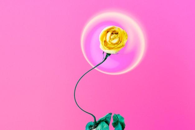Streszczenie różowe tło, trippy żółty kwiat róży