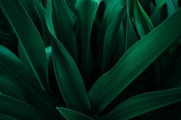 Streszczenie tekstura liścia