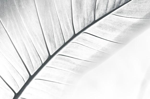 Streszczenie teksturowane tło liści