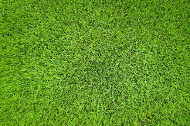 Streszczenie tle zielonego pola ryżowego z lotu ptaka widok z góry