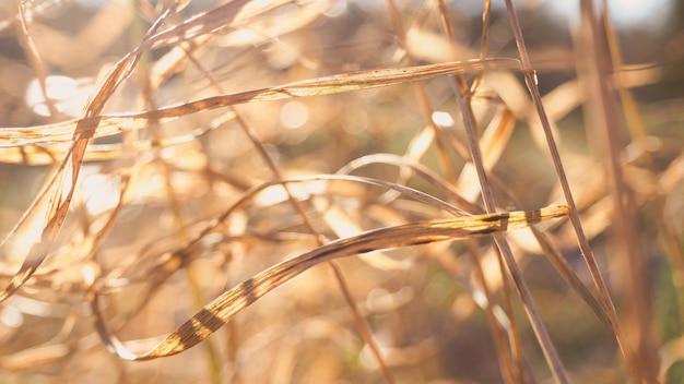 Streszczenie tło natura z rozmycia i trawy, śniegu i słońca.