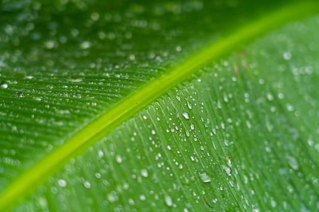 Streszczenie tło naturalne paski, szczegóły liści bananowych z kropli deszczu i niewyraźne bokeh na tle