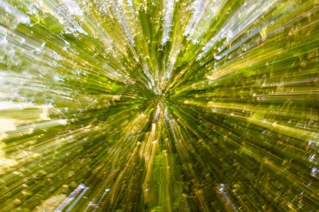 Streszczenie tło naturalne. rozmycie i lekkie malowanie drzewkami korony i ruchami prędkości słonecznych