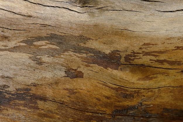 Streszczenie tło stary pęknięty pień drzewa. zbliżenie z góry na dzieła sztuki.