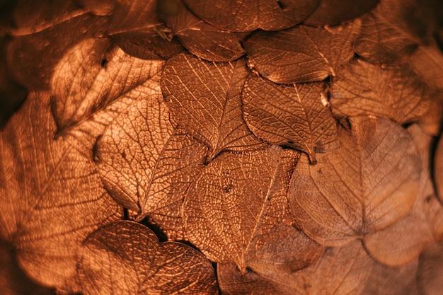 Streszczenie tło suszonych złotych liści, kopia przestrzeń