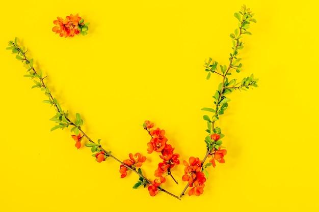 Streszczenie tło wiosna. gałąź kwitnąca japońska pigwa na żółtym tle. chaenomeles japonica. płaski świeckich, widok z góry. kompozycja wiosennych kwiatów.