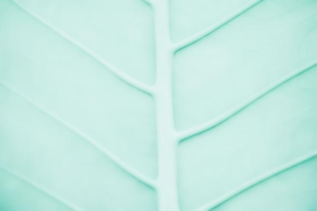 Streszczenie zielony liść tekstura tło dla projektu