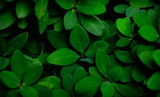 Streszczenie zielony liść tekstura tropikalny liść natura tło