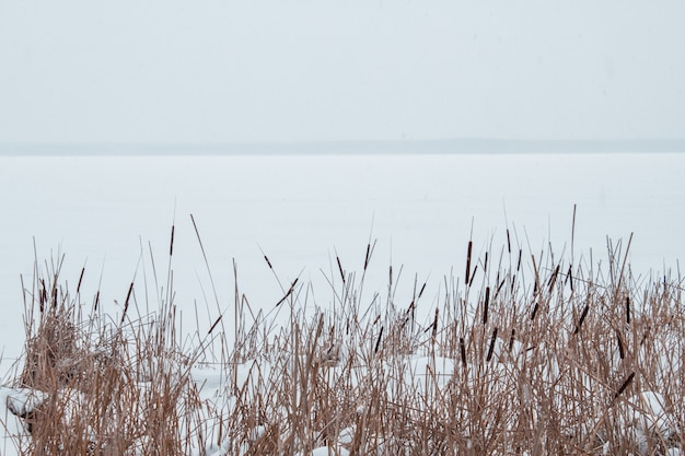 Stroiki w śniegu na brzegu zamarzniętej rzeki