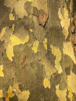 Struktura drewna, drewno w soczi zwiększyło widoczność kory.