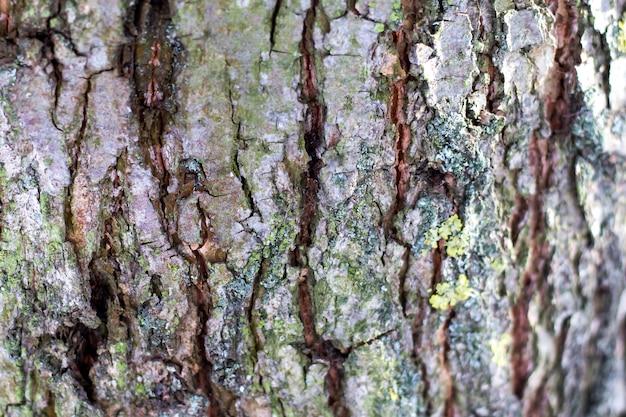 Struktura kory drzewa z pęknięciami i zwojami