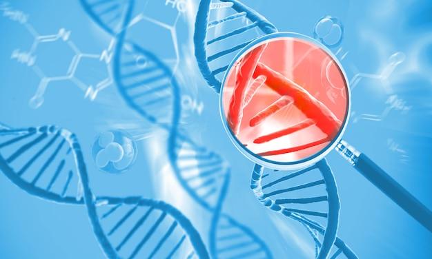 Struktura ludzkiego dna komórki
