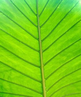 Struktura naturalnego tła liścia