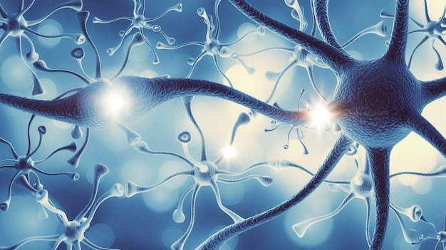 Struktura nerwowego układu nerwowego ludzkiego mózgu
