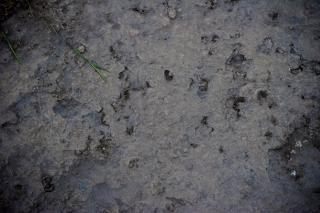 Struktura powierzchni gleby
