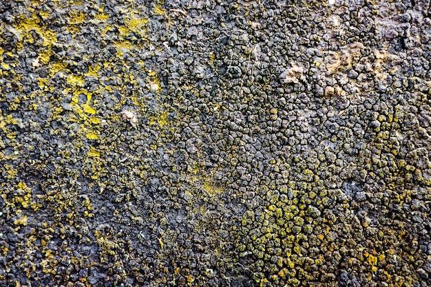 Struktura, powierzchnia ściany pokrytej żywicą, na której rośnie mech