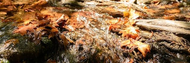 Strumień biegnący przez nagie korzenie drzew na skalistym klifie i opadłych liści jesienią