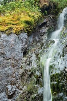 Strumień lasu spływa kaskadowo ze skał wśród traw i liści paproci