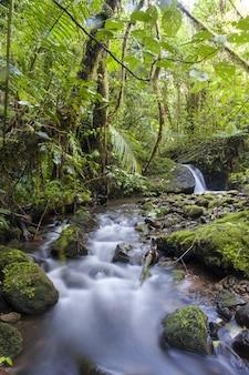 Strumień lasu w chmurach, kostaryka