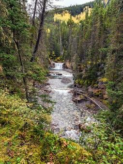 Strumień płynący w dolinie dziobowej w parku narodowym w kanionie johnston, kanada