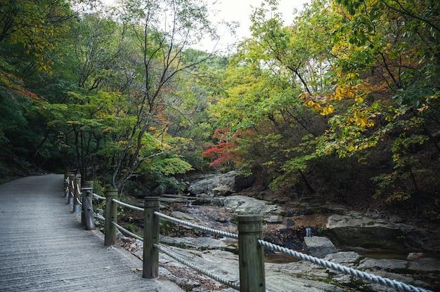 Strumień płynący w lesie jesienią ze ścieżką w parku narodowym
