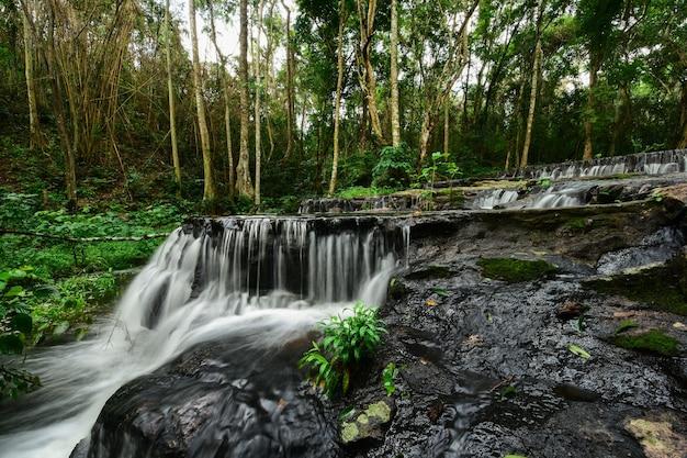 Strumień płynący w środku lasu.